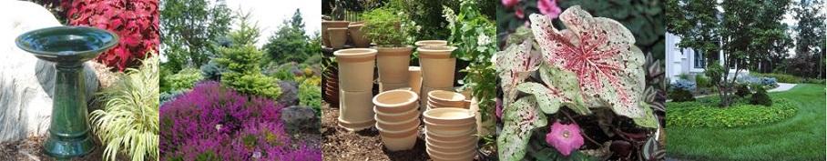 Landscape banner on webpage: bird feeder, plants, pots, leaves, and tree