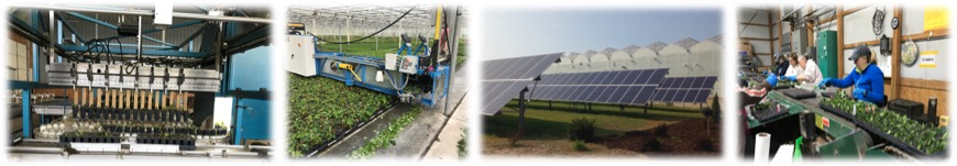 Images of energy efficiency practices in greenhouses.