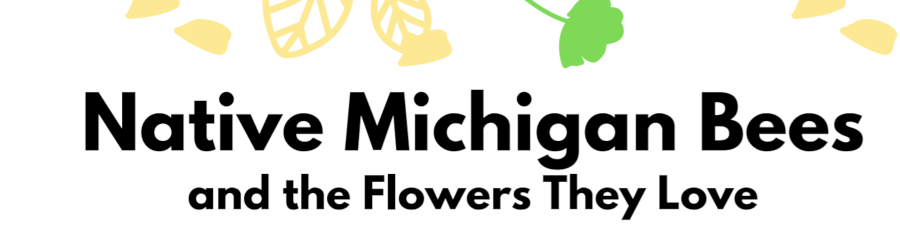 Native Michigan Bees and the Flowers They Love