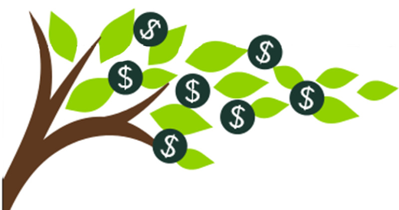 Image of money tree.