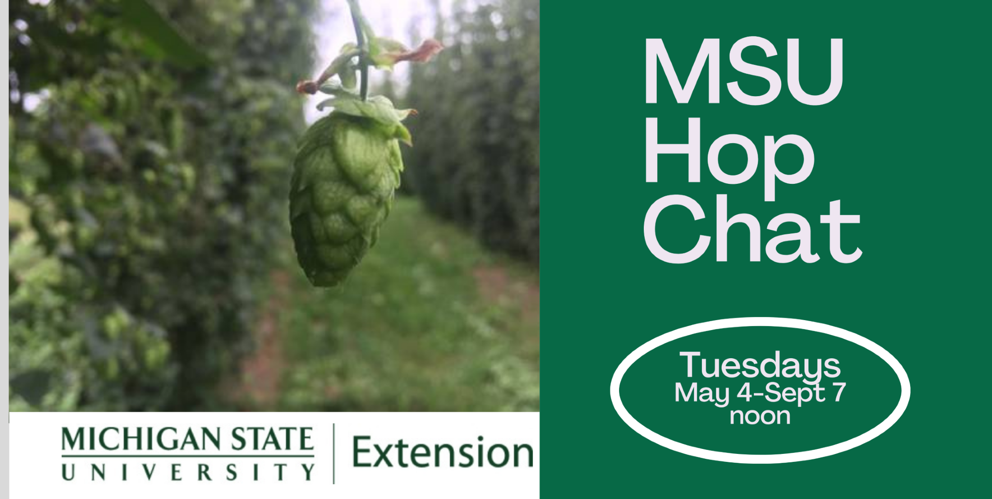 Michigan state university hopchat logo.