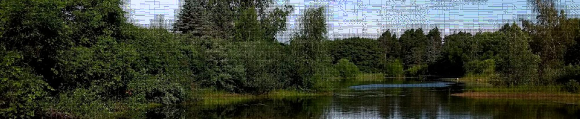 Image shows natural pond with vegetation and trees on a sunny day.