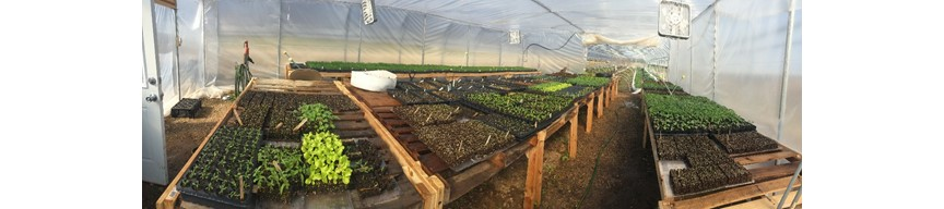 Banner picture of a hoop house.
