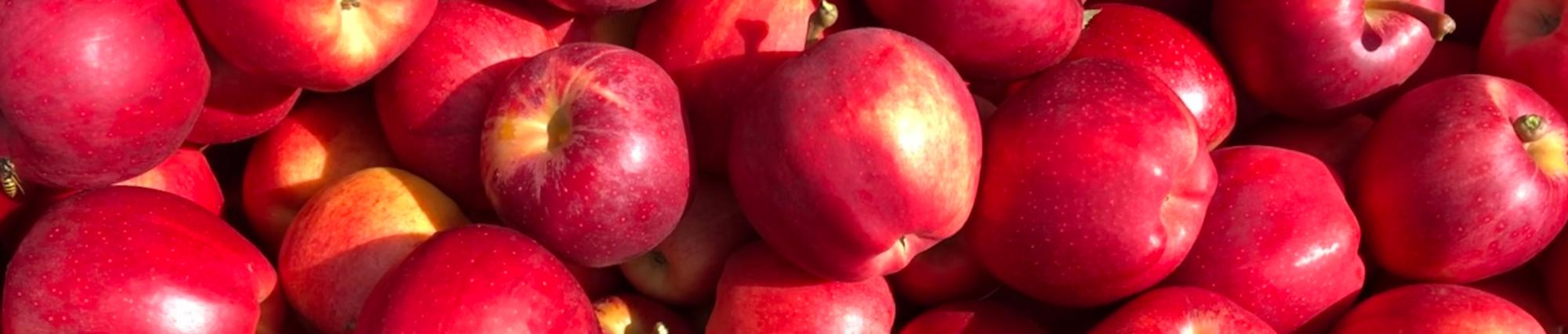 Image of apples.
