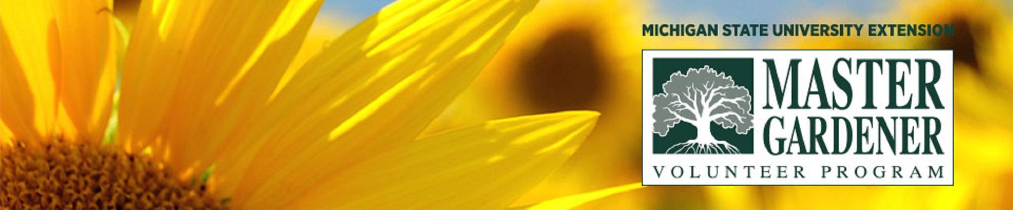 Image of a sunflower with the master gardener logo on it.