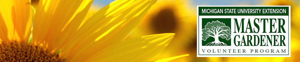 Michigan State University Master Gardener Program Text and picture of sunflowers