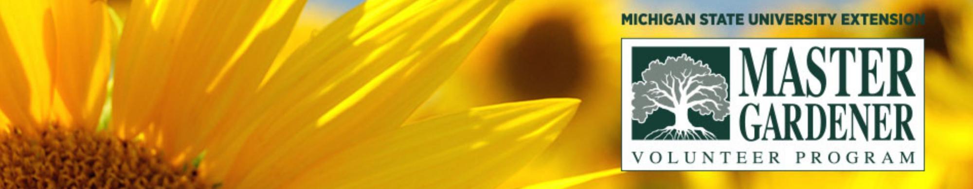Sunflower image with the Master Gardener Volunteer Program logo.